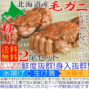 カニ かに 毛ガニ 2尾 1.0kg 極上 毛ガニ 北海道産 活目1.2kg ボイル冷凍 送料無料 北海道特産 即納|kanahashi-suisan|02