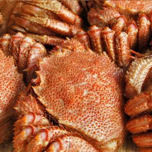 カニ かに 毛ガニ 2尾 1.0kg 極上 毛ガニ 北海道産 活目1.2kg ボイル冷凍 送料無料 北海道特産 即納|kanahashi-suisan|06