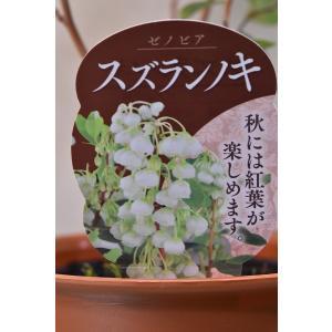 スズランの木 苗木 4.5号鉢 花木 庭木|kanaiengei