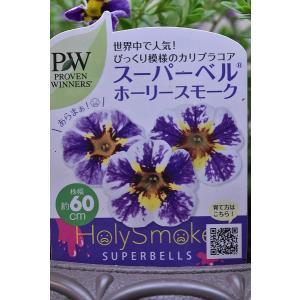 スーパーベル ホーリースモーク 10号スタンド鉢 鉢花 寄せ植え kanaiengei
