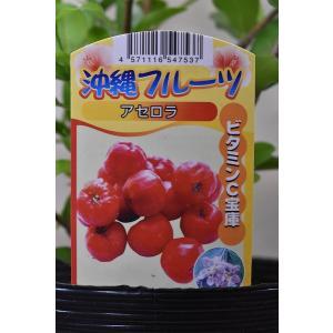 アセロラ 苗木 4.5号ポット 果樹|kanaiengei
