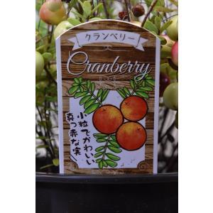 クランベリー 4.5号鉢 果樹|kanaiengei