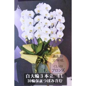 胡蝶蘭 コチョウラン 白大輪3本立ち 4L 30輪保証蕾含む 生産者直送 ギフト|kanaiengei