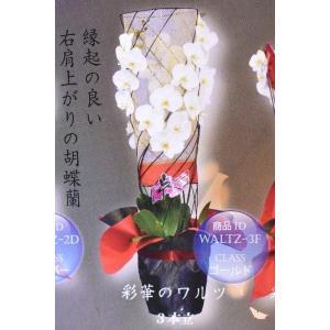 胡蝶蘭 コチョウラン 彩花のワルツ 3本立ち 生産者直送 ギフト|kanaiengei
