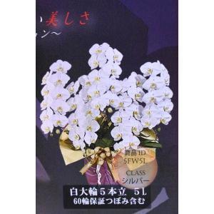 胡蝶蘭 コチョウラン 白大輪5本立ち 5L 60輪保証蕾含む 生産者直送 ギフト |kanaiengei