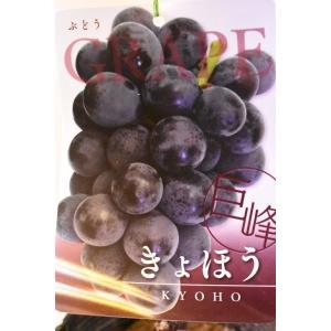 果樹苗 ブドウ 巨峰 きょほう 自根苗木 5号|kanaiengei