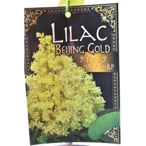 ライラック ペキンゴールドは、ペキンハシドイという ライラックの近縁種です。珍しい黄色の花は小輪多花...