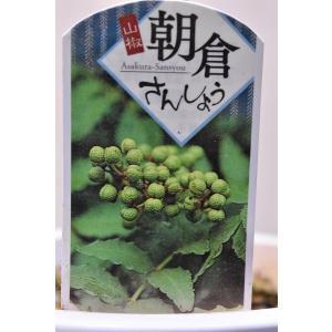 朝倉サンショウ 苗木 5号鉢 B|kanaiengei