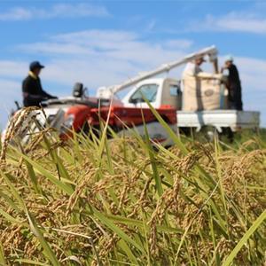 JAはくい はくい自然栽培米コシヒカリ(精米)1kg【平成30年産米】|kanazawa-honpo|04