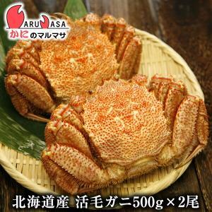 かに カニ 蟹 北海道産 活毛ガニ 500g×2尾セット 極...
