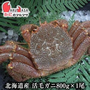 かに カニ 蟹 北海道産 活毛ガニ 800g 1尾 極上毛が...