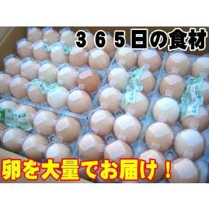 日常の食材 卵を大量でお届け 鶏卵 Mサイズ 1箱20パック入|kani