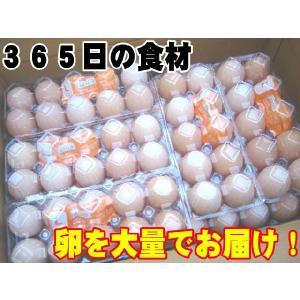 日常の食材 卵を大量でお届け 鶏卵 Lサイズ1箱20パック入|kani