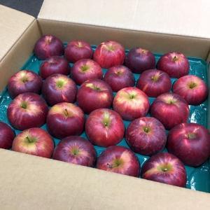 送料無料 ご予約 紅玉 こうぎょく りんご リンゴ 林檎 小玉 10kg|kani