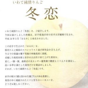 ご予約 岩手 純情りんご 新品種林檎 白いリンゴ 冬恋 2.5kg|kani