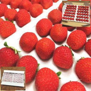 約300g×2P:15玉〜36玉×2P(大きさにより玉数は異なります)*夏いちごの品種ですので、形が...