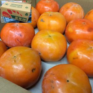 送料無料 ご予約 訳あり 富有柿 ふゆがき フユガキ 7kg サイズ不定 かき カキ|kani