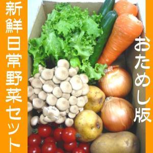 さんきん新鮮日常野菜セット!おためし版|kani