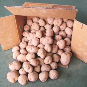 ≪4000円以上送料無料≫国産 じゃがいも ジャガイモ 馬鈴薯 1箱10kg kani