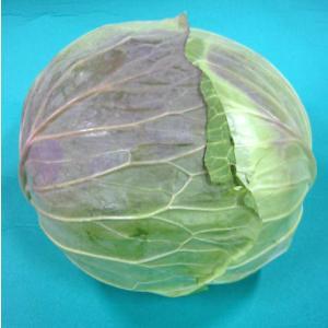 日常の一般野菜 キャベツ 1玉|kani