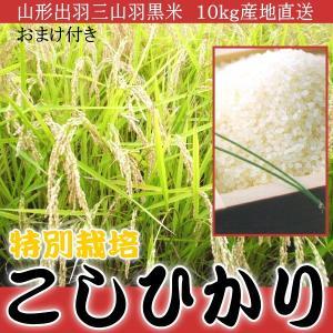 山形出羽三山羽黒米 特別栽培 こしひかり 100%10kg産直おまけ付|kani