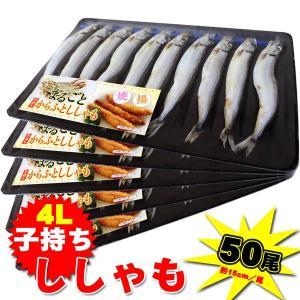 【週間特売】訳あり カラフト シシャモ50尾セット(1パック10尾×5パック)|kani