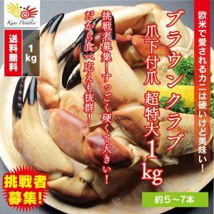 完売御礼 / ブラウンクラブ爪下付爪 超特大 総重量1kg|kanipara