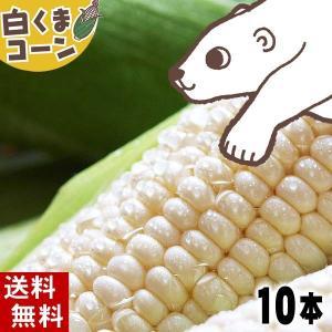 (送料無料)白いとうもろこし 白くまコーン ピュアホワイト 10本入り 生食 北海道産スイートコーン...