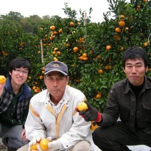 名産地の完熟清見オレンジ4kg|kanjyukuya|04