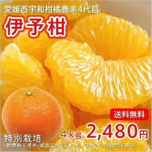 イヨカン 4kg 愛媛産 特別栽培|kanjyukuya