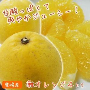 灘オレンジ 4kg グレープフルーツのような河内晩柑|kanjyukuya