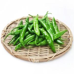 [冷]時価・青唐辛子1kg(中辛)-韓国産/韓国野菜/韓国食品/韓国市場