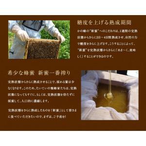 【予約販売】新蜜プレミアムみかん蜂蜜 6月中旬〜下旬より順次発送 国産 はちみつ みかん蜂蜜 蜂蜜専門店 かの蜂 |kanohachi|06