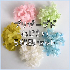 アジサイ 5種類セット プリザーブド加工 ハーバリウム レジン キット ポイント 花材 あじさい お試し 封入 素材 買い足し 紫陽花 送料無料