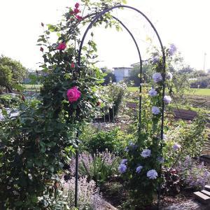 バラ等のつる性植物に最適 おしゃれなデザインのガーデンアーチ ガーデンアーチ タイプD|kantoh-house