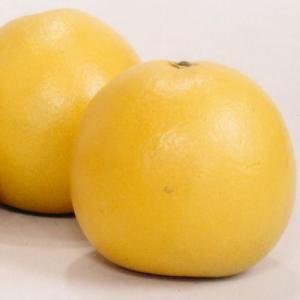 八代特産「晩白柚ばんぺいゆ」LL2玉|karasirenkon