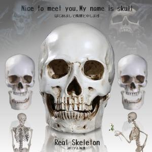 超リアル 髑髏 ドクロ 驚き レプリカ 人間  骨 人体 模型 勉強 インテリア  大人 子供 KZ-KASEKI  予約|kasimaw