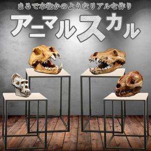 アニマルスカル 超リアル 骨 骸骨 化石 展示 インテリア 動物 パンダ オオカミ 犬 オランウータン レプリカ KZ-ANISUKA 即納|kasimaw