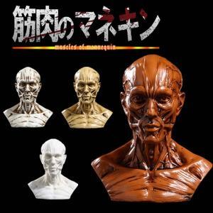 頭 筋肉 顔 頭部 オブジェ 置き物 レプリカ インテリア ゴシック ホラー ハロウィン KZ-MUSMANE 予約|kasimaw