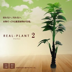 観葉植物 造花 新型リアルプラント大型 人工 部屋 リアル 会社 緑 おしゃれ インテリア フェイクグリーン KZ-MI-PIKOKU-175-E12 予約|kasimaw