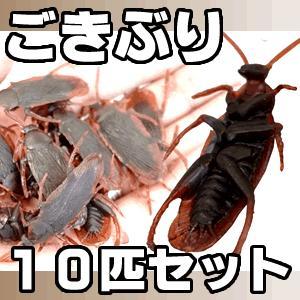 クリスマスグッズ サプライズ イベント ゴキブリ 10匹セット MI-01G 即納|kasimaw