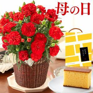 母の日 花 カーネーション 花とお菓子 ( 2021 鉢花 鉢植え スイーツ 和菓子 お菓子 プレゼント ギフト 義母 60代 ) カステラ 個包装 セット MD99|kasutera1ban