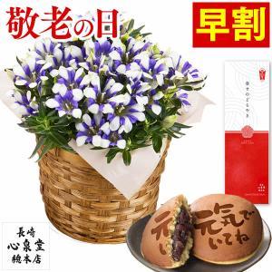 母の日 花 カーネーション 早割 ( 2021 ギフト プレゼント 母の日ギフト 贈り物 種類 鉢花 40代 50代 60代 70代 80代 ) 4号 送料無料 MDSI|kasutera1ban