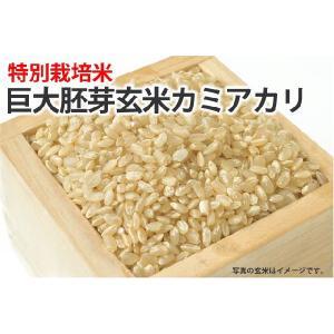 巨大胚芽玄米カミアカリ【玄米】1kg...