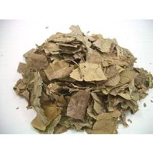 グァバ茶 6袋セット|kawamotoya