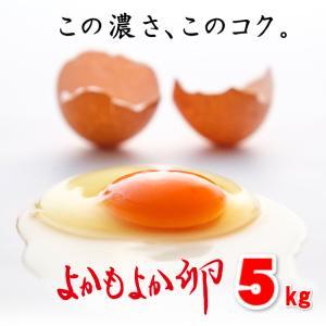 【送料無料】宮崎県都城産「よかもよか卵」80個入り