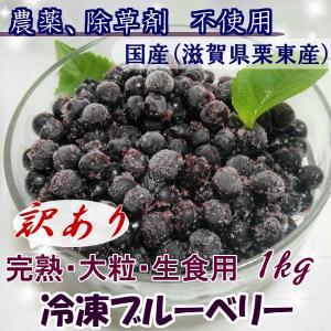 【2018年度分】訳あり 冷凍ブルーベリー 1kg 無農薬栽培 国産ブルーベリー ラビット・アイ クール便 冷凍