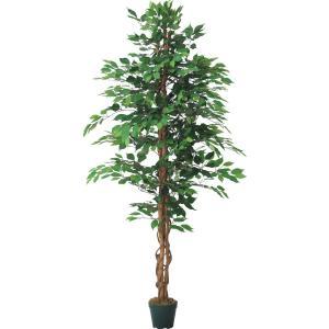 グリーン 180cmファイカスツリー