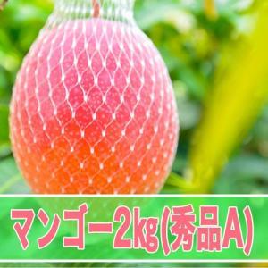 マンゴー 秀品A 2kg箱|kedoku-mango