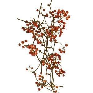 ドライフラワー・サンキライのツル・実付き・全長40cm・1束6本セット(天然素材/自然素材)(実もの/果実/木の実)(花材)(アレンジ/ディスプレイ/装飾)